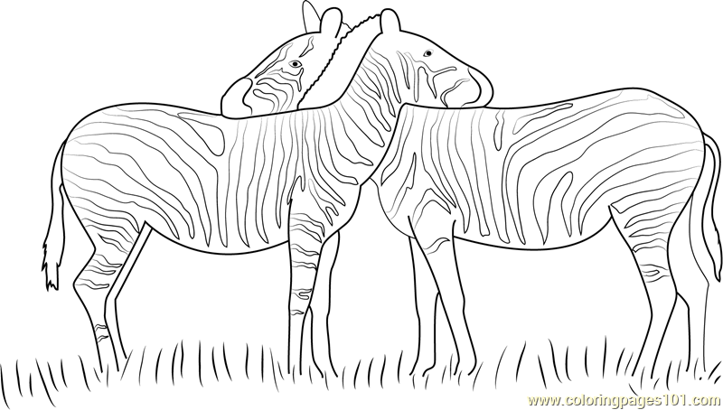 Affordable Zebras In Love Coloring Page With Coloring Page