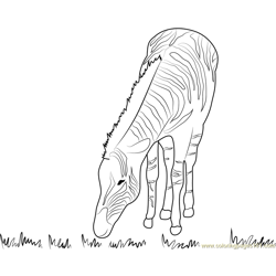 Hungry Zebra Free Coloring Page for Kids