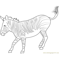 Mountain Zebra Free Coloring Page for Kids