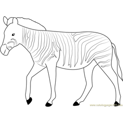 Strutting Zebra Free Coloring Page for Kids