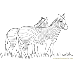 Two Zebras Walking Together Free Coloring Page for Kids