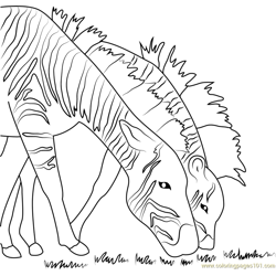 Two Zebras Free Coloring Page for Kids