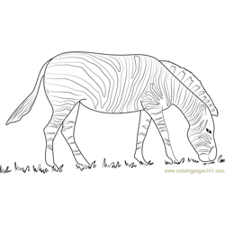 Zebra Black and White Free Coloring Page for Kids