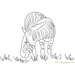 Zebra Grazing Free Coloring Page for Kids