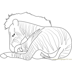 Zebra See Free Coloring Page for Kids