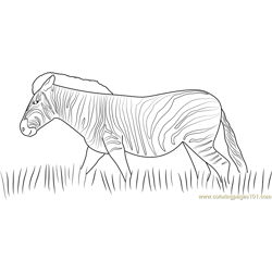 Zebra Walking in the Grass Free Coloring Page for Kids
