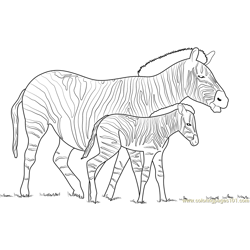 Zebra With his Little Son Free Coloring Page for Kids