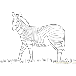Zebra look Free Coloring Page for Kids
