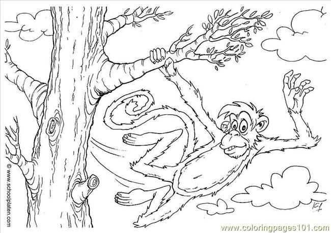 Res Pages Photo Monkey Dl2863 Coloring Page