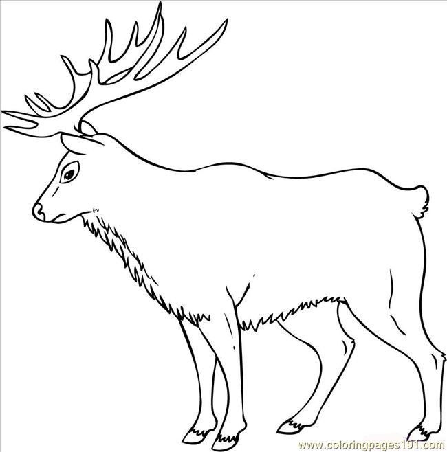 43 How To Draw An Elk Step 7 Coloring Page - Free Mouse Coloring ...