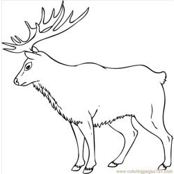 43 How To Draw An Elk Step 7