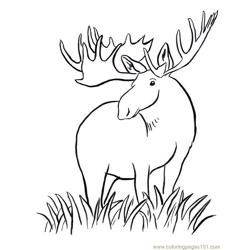 Moose big horn coloring page