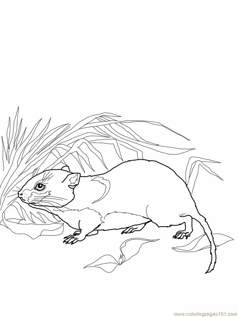 Vole-mouse 2 Coloring Page