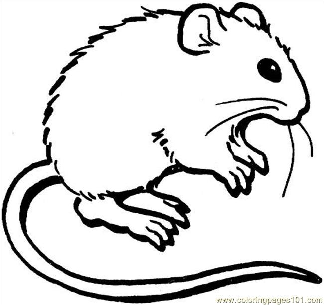 mouse 3 coloring page coloring page - Coloring Picture Of A Mouse