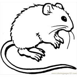Mouse 3 Coloring Page