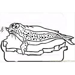 Seal On The Ice Free Coloring Page for Kids
