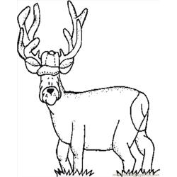 more others coloring pages deer