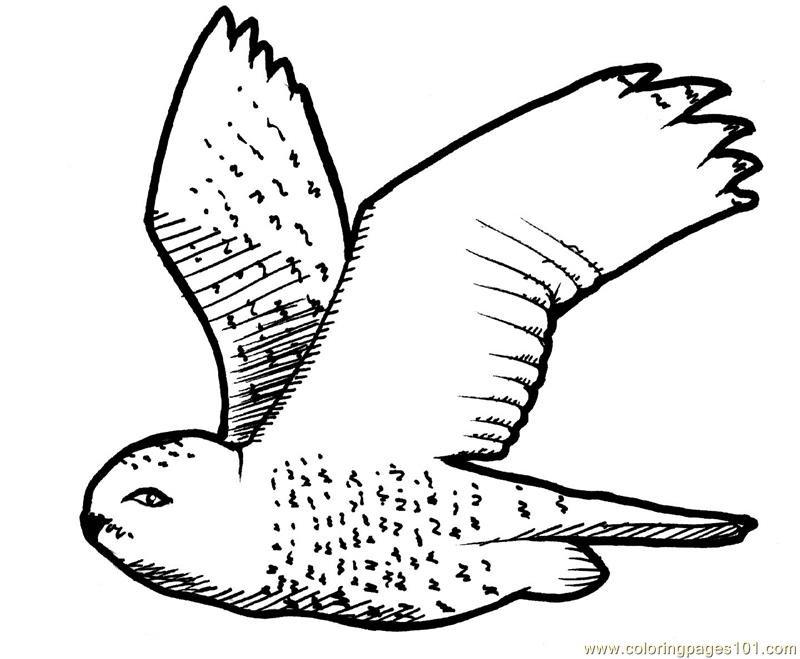 flying owl coloring page