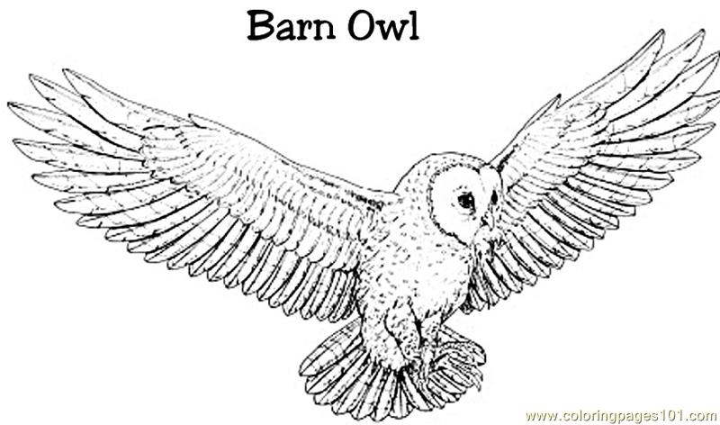 Burn Owl Coloring Page