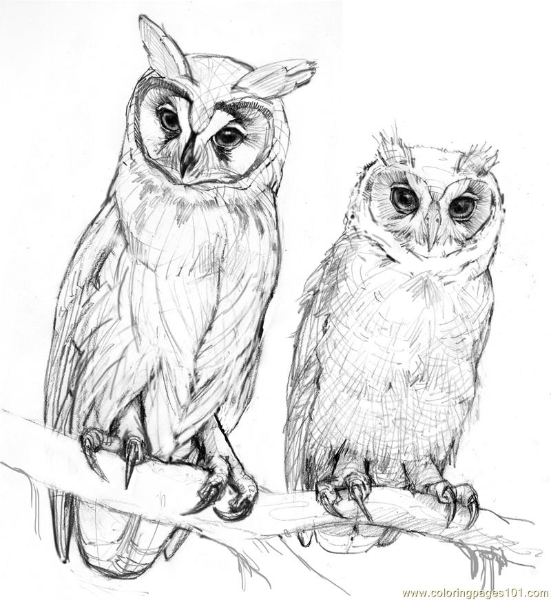 Free Owl Coloring Pages