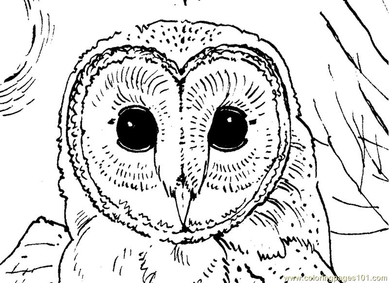 Owl face Coloring Page Free Owl Coloring Pages ColoringPages101com