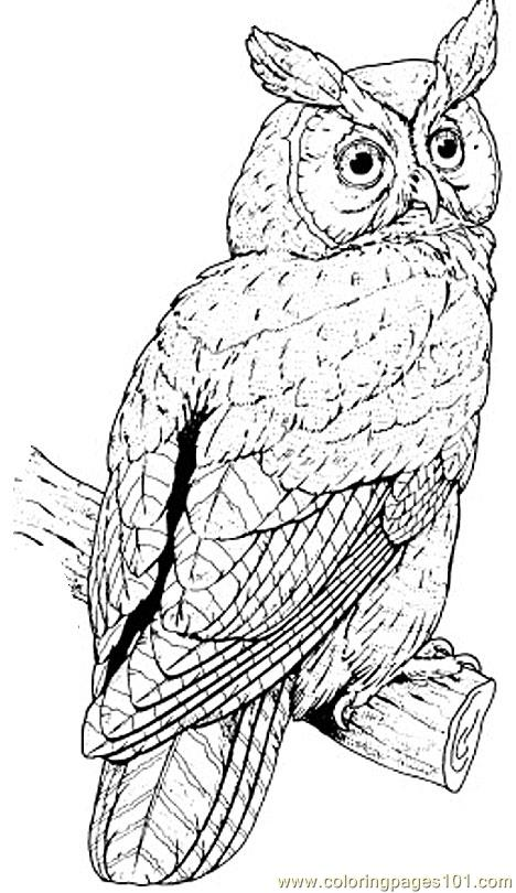 Owl Coloring Pages Pdf : Great horned owl coloring page free pages