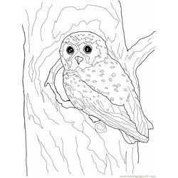 Elf Owl Free Coloring Page for Kids