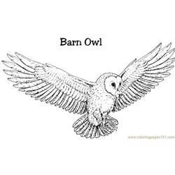 Burn owl Free Coloring Page for Kids
