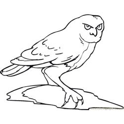 Owl Free Coloring Page for Kids