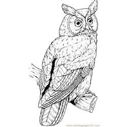 Great horned owl Free Coloring Page for Kids