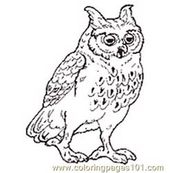 The Mitten Mural Owl Coloring Page Reversed