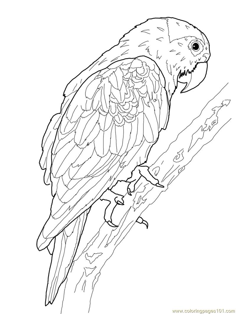 Blue crowned Green Parrot Coloring Page - Free Parrots ...