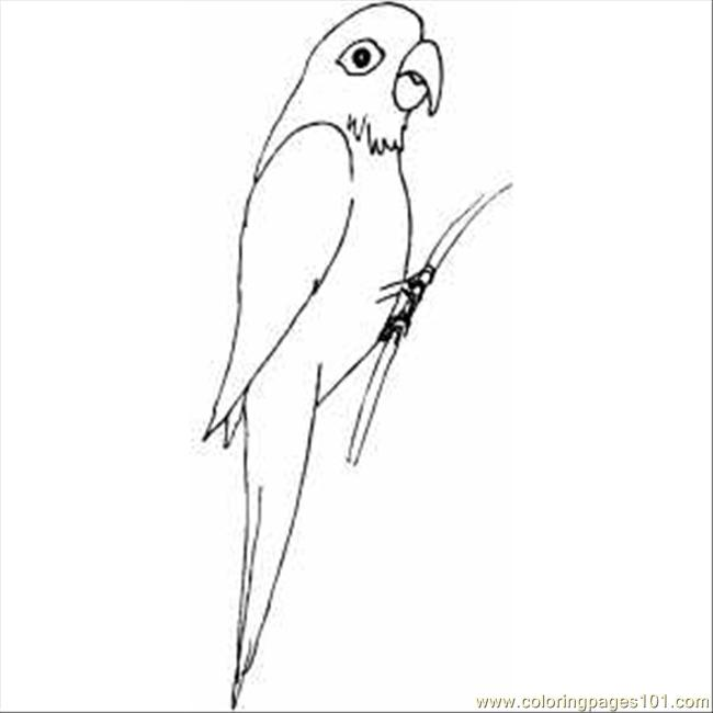 Parrot3 Coloring Page