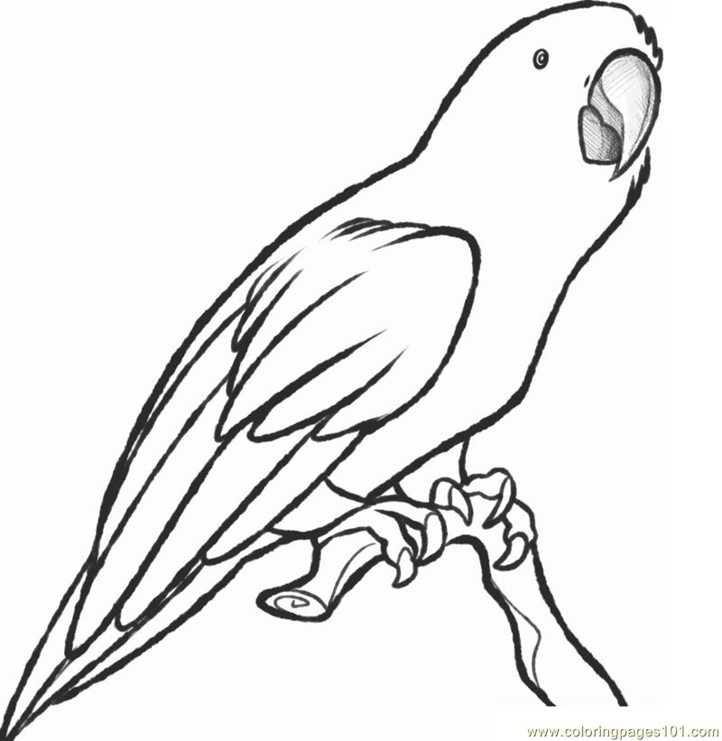 Parrot coloring page free parrots coloring pages for Coloring pages parrot