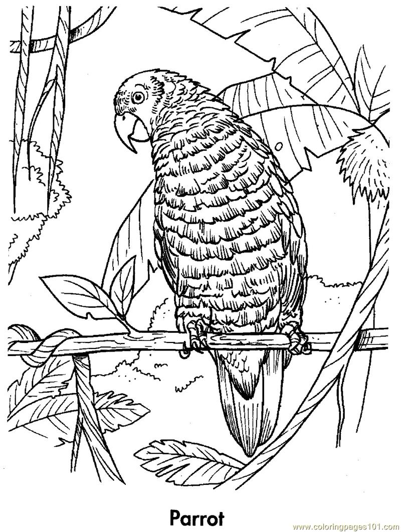 Parrot coloring page free parrots coloring pages for Cockatiel coloring pages