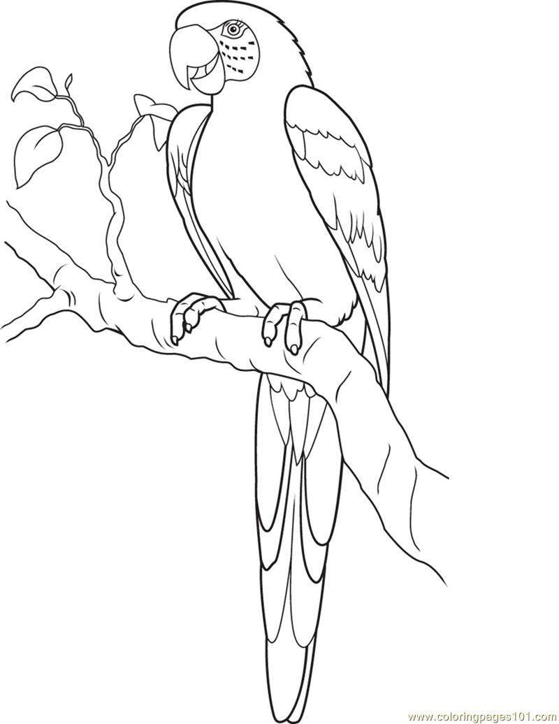 types of birds coloring pages - photo#4