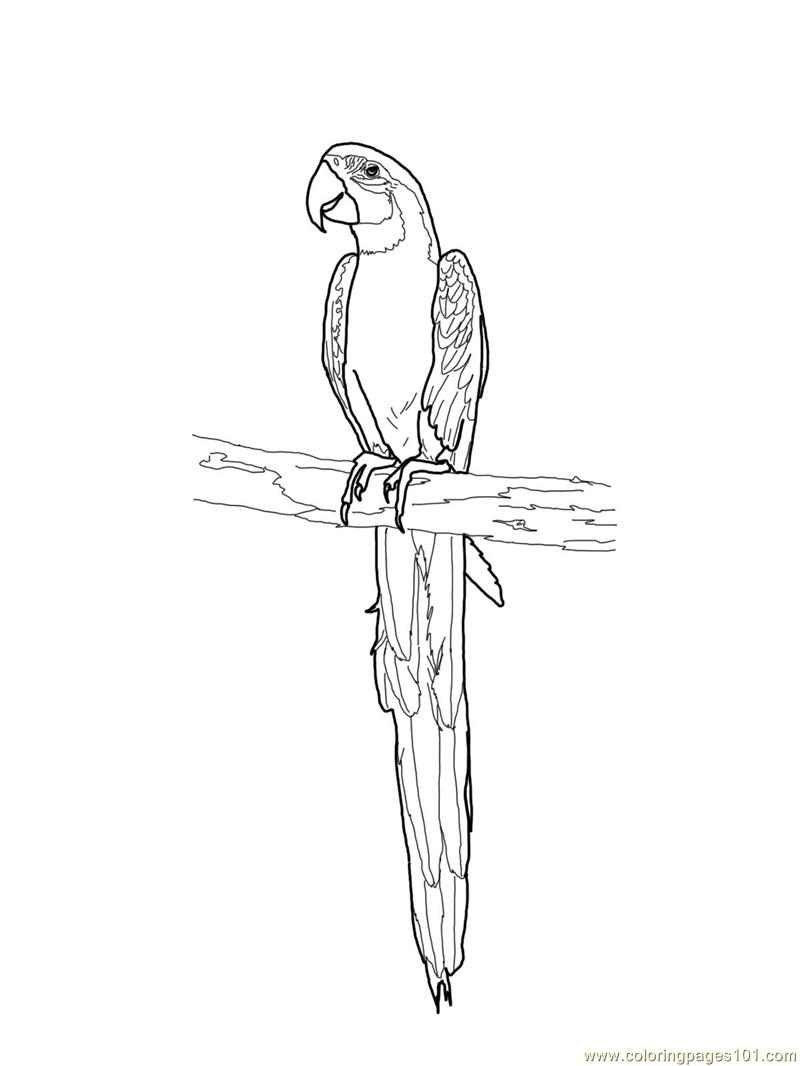 Blue and gold macaw Coloring Page - Free Parrots Coloring Pages ...