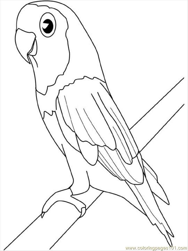 Parakeet Coloring Page  Free Parrots Coloring Pages
