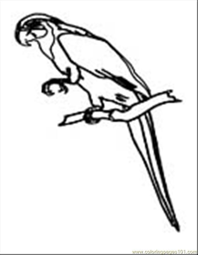 Parrot08 Coloring Page