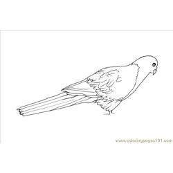 Oring Animal King Parrot Bird Free Coloring Page for Kids
