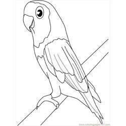 Parakeet Free Coloring Page for Kids