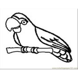 Parrot09 Free Coloring Page for Kids
