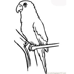 Parrot Free Coloring Page for Kids