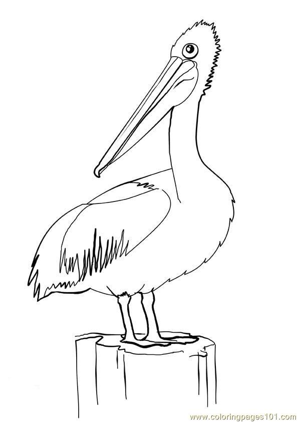 pelican animal coloring pages. Pelican21 Coloring Page  Free Pelican Pages