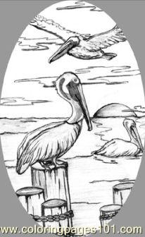Pelican 1 Coloring Page Free