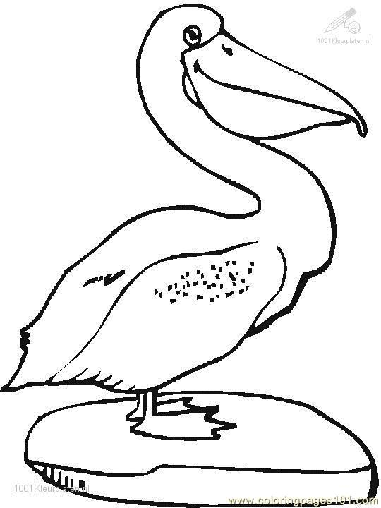 Merveilleux Pelican Coloring Page