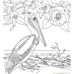 Magnolia And Brown Pelican