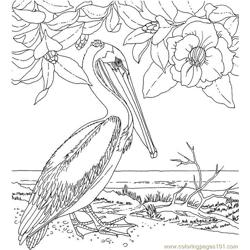 Pelican Free Coloring Page for Kids