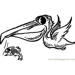 Pelican With Fish.svg.hi