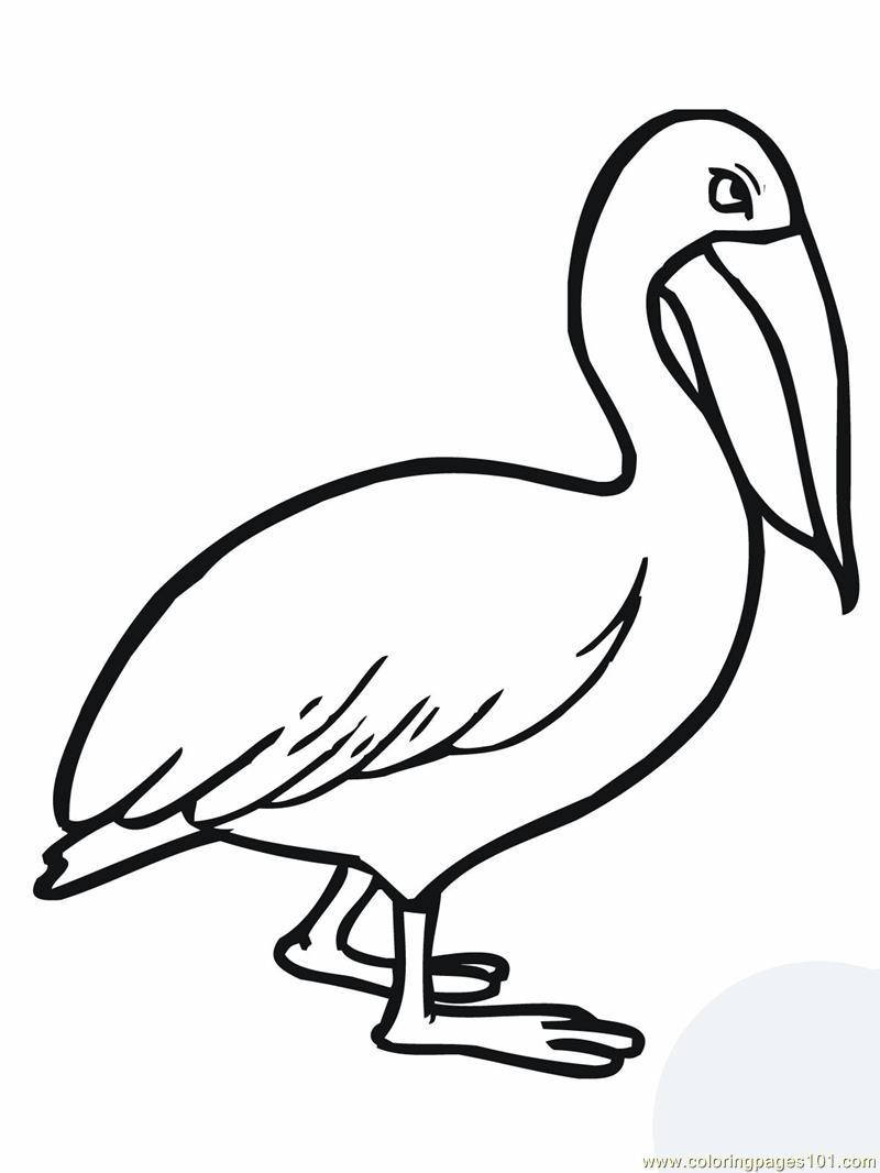 Walking pelican Coloring Page